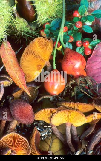 Autumn Still life berries fungus - Stock Image