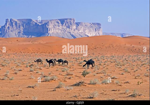 red sands,saudi arabia - Stock Image