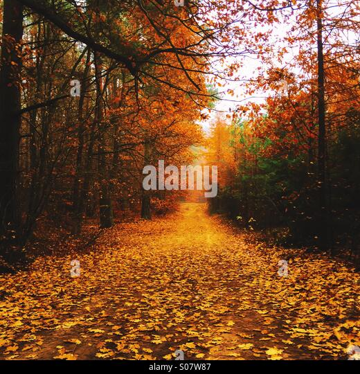 Autumn - Stock Image
