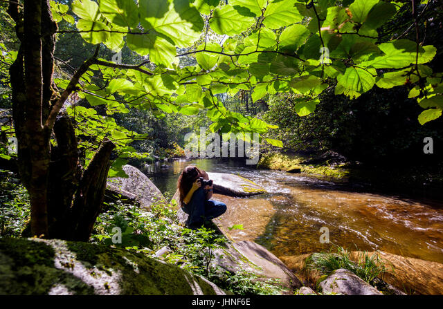 Photographer at Davidson River in Pisgah National Forest - near Brevard, North Carolina, USA - Stock Image