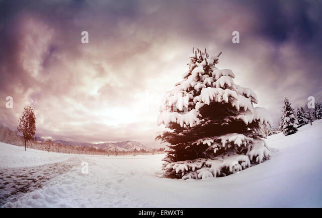 Winter scenic with spruce in the mountain park at dramatic sky in Kazakhstan - Stock Image