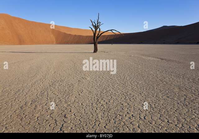 Dead trees in dried clay pan, Namib Naukluft National Park, Namibia - Stock Image
