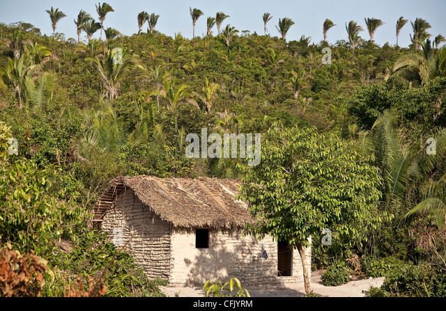 Wattle and daub house at Itamatatiua Quilombo, Alcântara, Maranhão. Brazil. Babacu trees in background - Stock Image