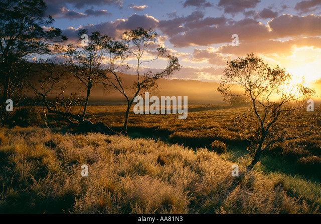 Polblue Marsh at dawn Barrington Tops National Park New South Wales Australia - Stock Image