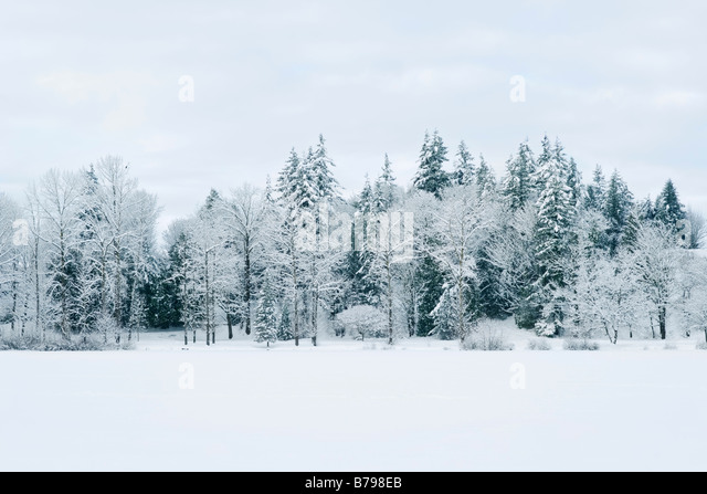 Snow covered trees line Mill Lake in Abbotsford BC Canada - Stock-Bilder