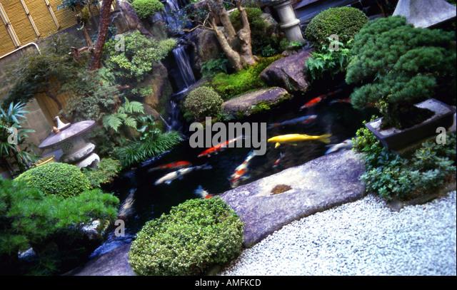 Koi pond autumn stock photos koi pond autumn stock for Ornamental pond fish uk