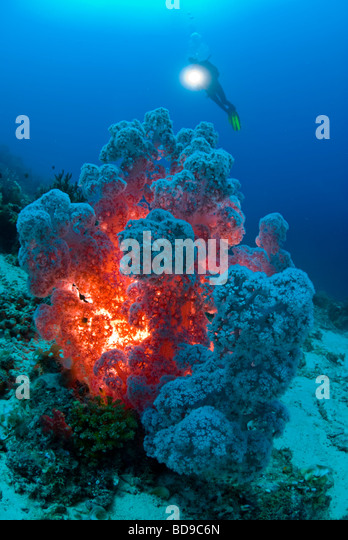 Healthy rich soft coral photographed in Philippines using a different lighting technique. - Stock Image