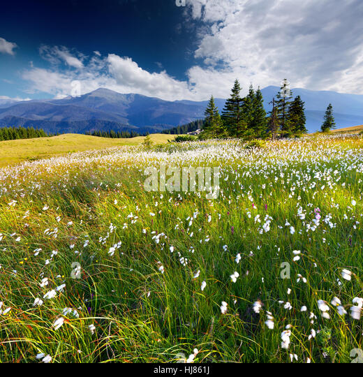 Beautiful summer landscape in the  mountains with a feather grass - Stock Image