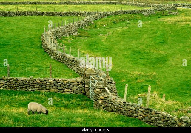 Stone fence in Connamara National Park, Ireland - Stock Image