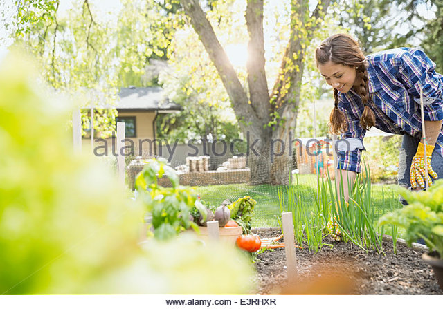 Woman tending to vegetable garden - Stock Image