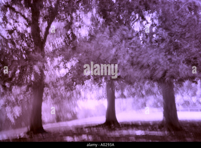Trees - Stock Image