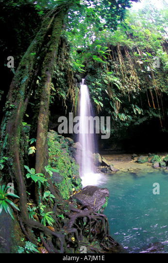 Dominica West Indies Caribbean Emerald Pool Famous Rain Forest Landmark - Stock Image
