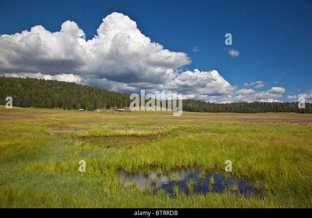 Upper Pacheta Cienega near Reservation Lake in the White Mountains, Fort Apache Indian Reservation, Arizona, USA - Stock Image