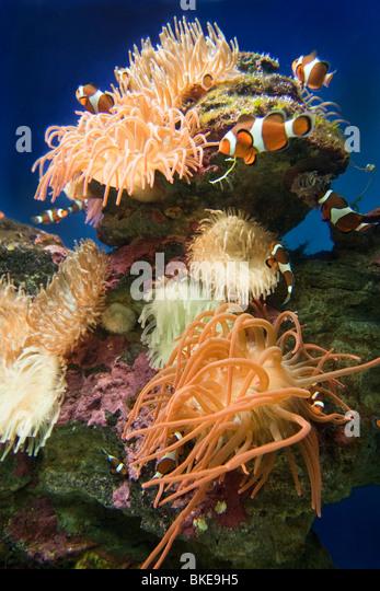 Aquarium south africa cape town,Victoria Albert  waterfront, - Stock Image