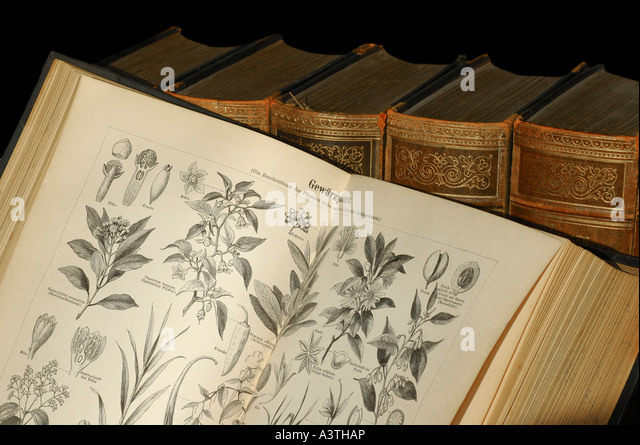 Illustrations of spice plants in an old encyclopedia - Stock-Bilder