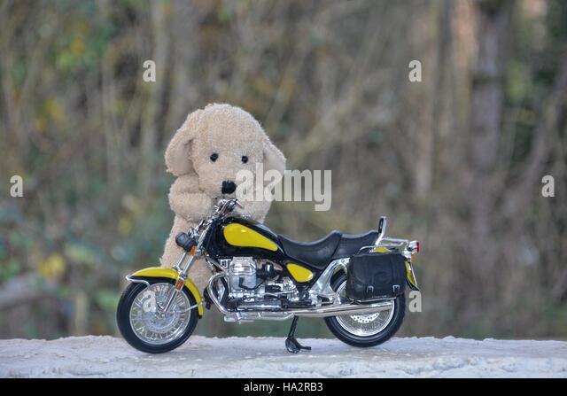Daytona Dog Track >> Motorcycle Races Stock Photos & Motorcycle Races Stock Images - Alamy