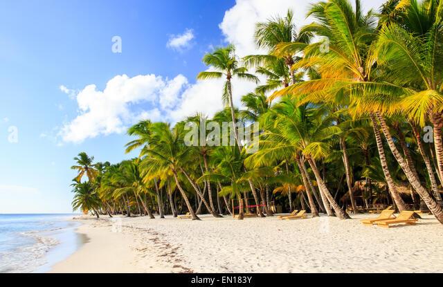 Beautiful caribbean beach on Saona island, Dominican Republic - Stock Image