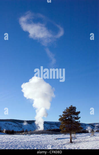 Old Faithful geyser steam clouds on clear winter day; Yellowstone National Park, Wyoming, USA. - Stock Image