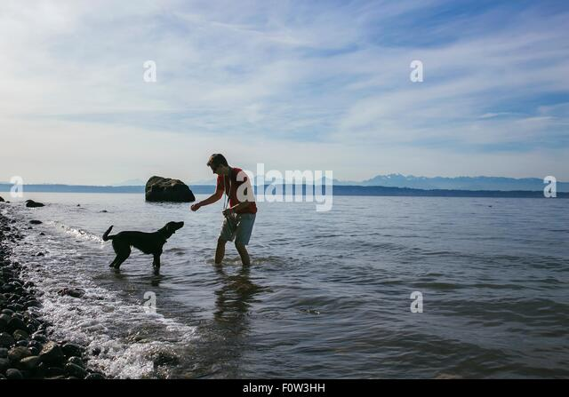 Man playing with his dog on shores of Puget Sound, Seattle, Washington State, USA - Stock-Bilder