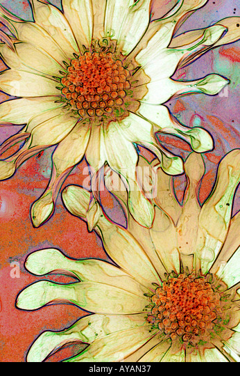 stylized art version of daisies with pointy petals - Stock Image