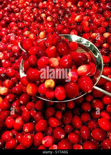 Cranberries in water - Stock Image