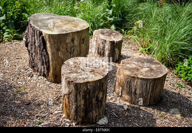 Bark chippings stock photos bark chippings stock images for Tree trunk uses