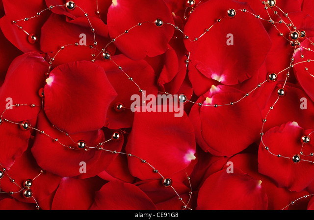 Red rose petals with beads can be used as background - Stock Image