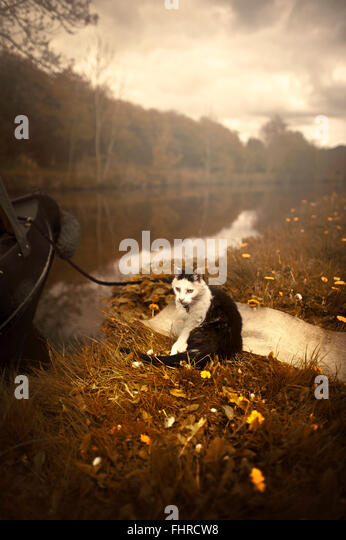 a black and white cat sitting by the boat by the river on grass - Stock Image
