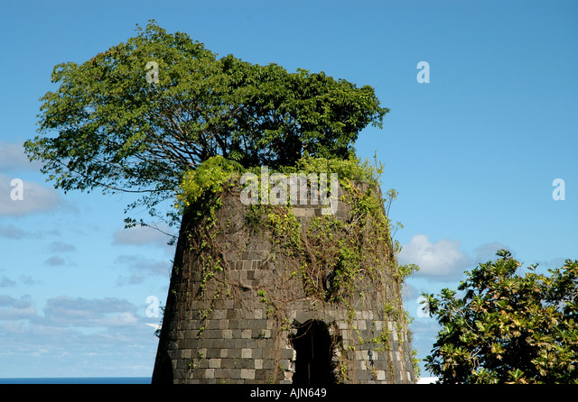 St Kitts Caribbean West Indies Old Sugar Mill Tower with tree growing out of the top - Stock Image