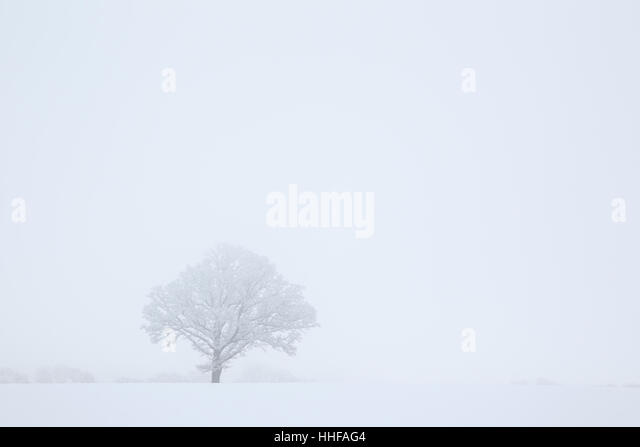 High key snow covered tree in a winter snow shower - Stock Image