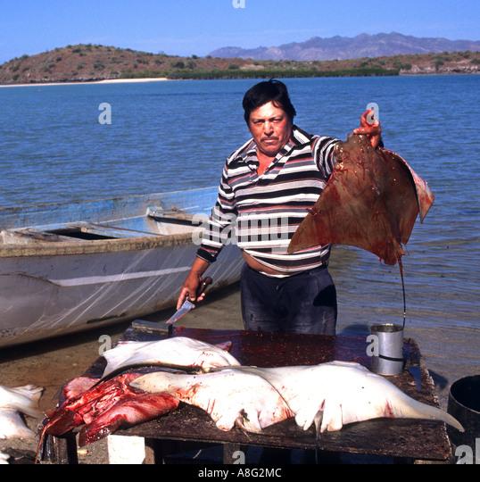 Cabo san lucas fishing stock photos cabo san lucas for Fishing cabo san lucas
