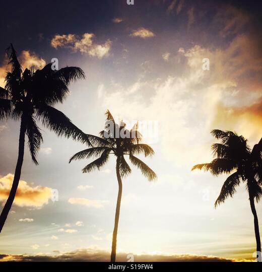 Palm trees at sunset. Maui, Hawaii USA. - Stock Image