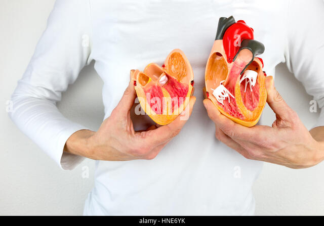 Woman holds open model heart at white body - Stock Image