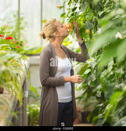 Florists woman working in greenhouse. - Stock Image