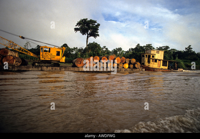 Tropical logs to be used for plywood and planks float down Amazon river to Iquitos Peru - Stock Image