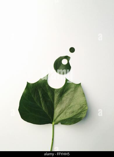 High Angle View Of Leaf Against White Background - Stock Image