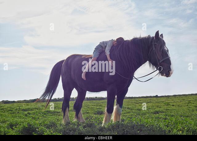 Boy hugging horse, Rosudgen, Cornwall, United Kingdom - Stock Image