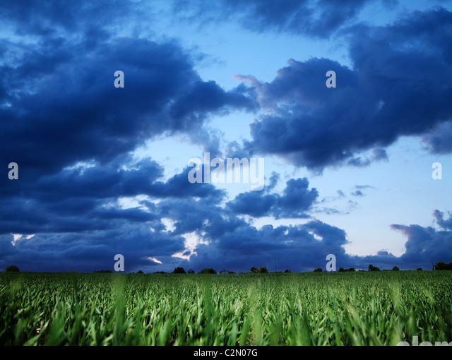 Wheat field and dark blue stormy sky. - Stock Image
