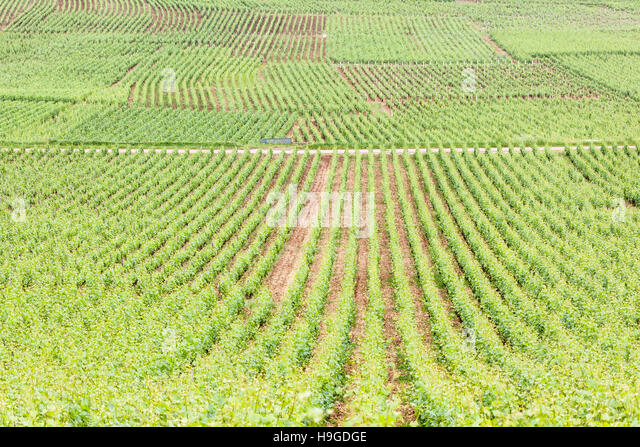 Vineyards near to the twon of Beaune in Burgundy, France. - Stock Image
