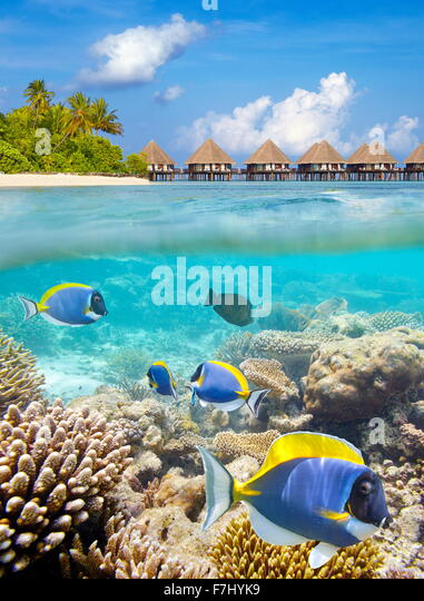 Underwater view at tropical fish, Maldives Island, Ari Atoll - Stock Image