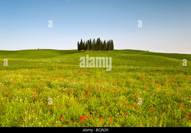 Tuscan landscape, Tuscany, Italy, RF - Stock-Bilder