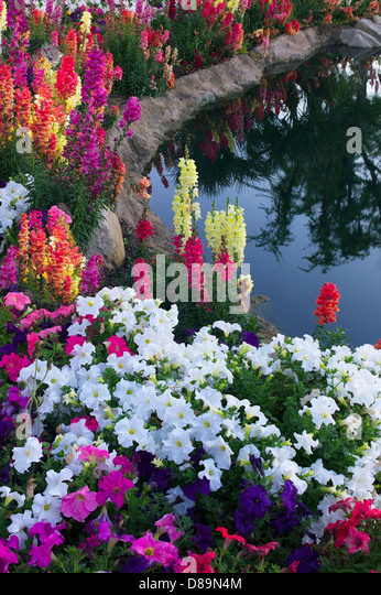 Flower garden at pond side. Palm Desert, California - Stock Image