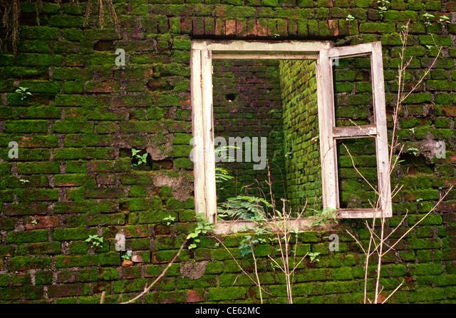 moss covered bricks stock photos moss covered bricks stock images alamy. Black Bedroom Furniture Sets. Home Design Ideas