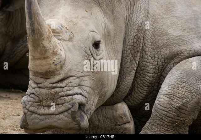 Rhinoceros - Stock-Bilder