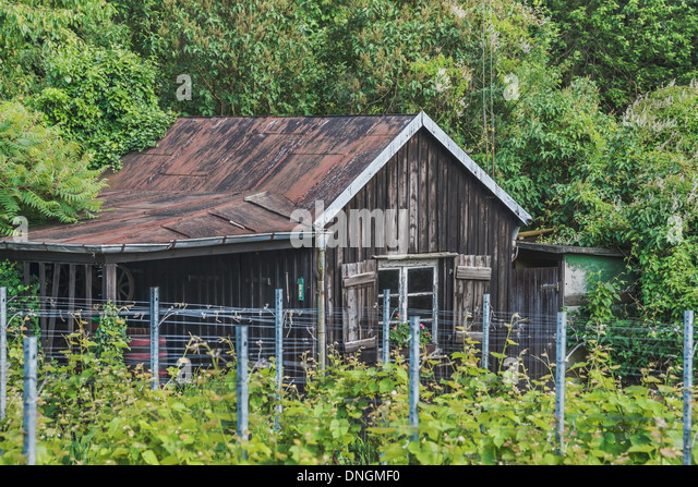 Vine in front of an old wooden hut, Saxony, Germany, Europe - Stock-Bilder