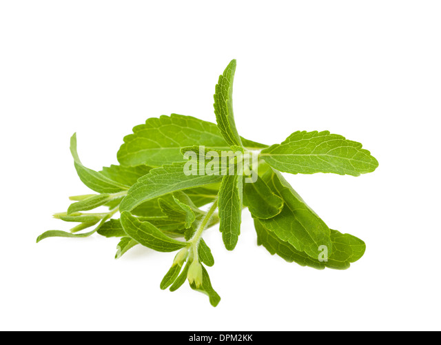 stevia plant stock photos stevia plant stock images alamy. Black Bedroom Furniture Sets. Home Design Ideas