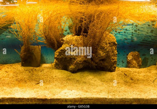Fish aquarium rocks stock photos fish aquarium rocks for Yellow fish tank water