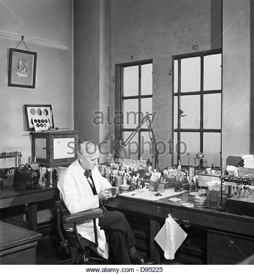 Professor Alexander Fleming at work in his laboratory at St Mary's Hospital, London, during the Second World - Stock-Bilder