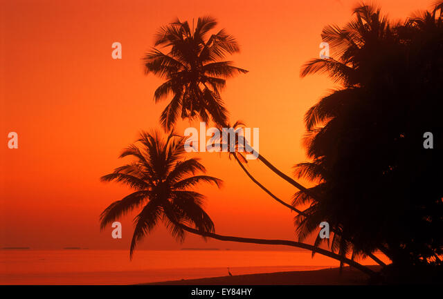 Palm trees over calm shore with heron and passing boat at dawn in Maldive Islands - Stock Image