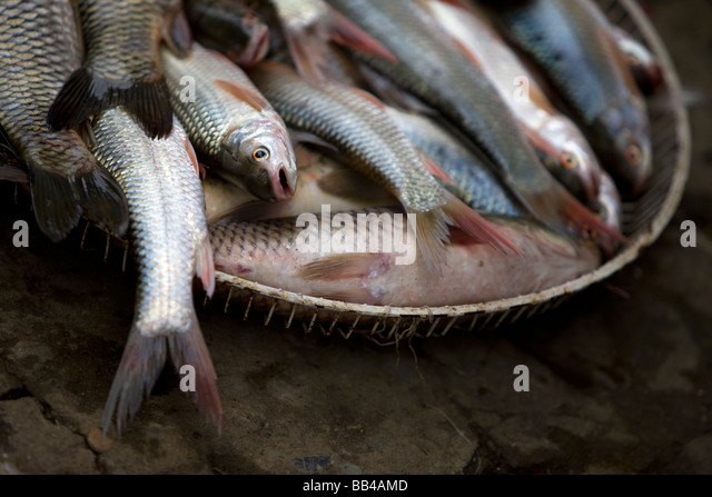 Vietnam fish stock photos vietnam fish stock images alamy for Ornamental pond fish port allen